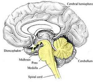 Acute cerebellar ataxia signs symptoms treatment medfriendly ccuart Choice Image
